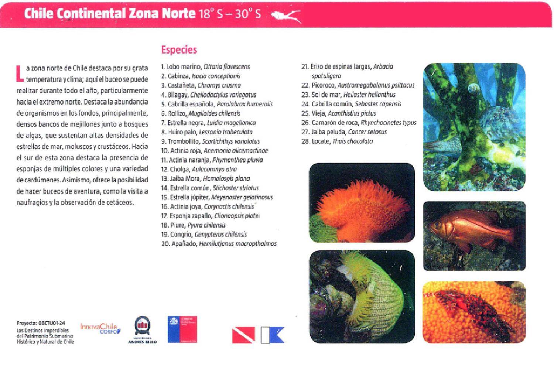 Especies marinas en las costas de chile by sernatur chile for Poda de arboles zona sur
