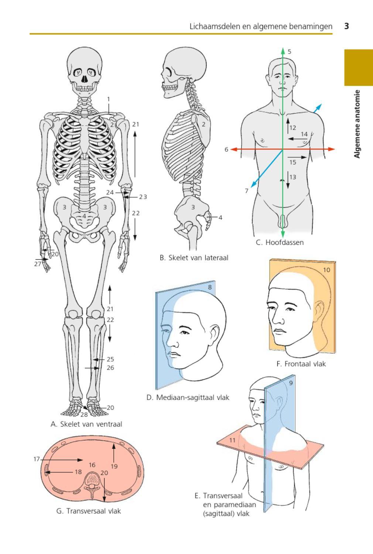 Sesam Atlas Van De Anatomie - Slimniyaseru