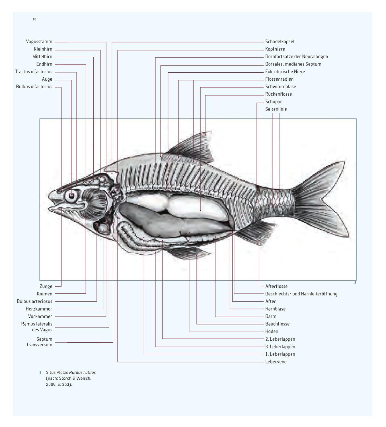 Holm, Faszinierende Fische by Haupt Verlag - issuu