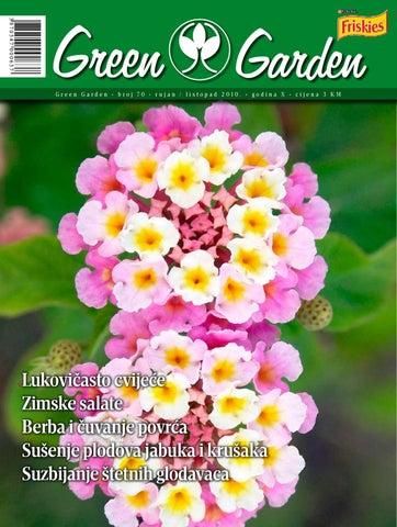 datira iz Azije cvjeta trešnje