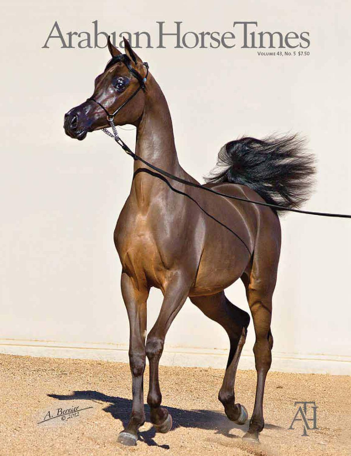 Communication on this topic: How to Care for an Arabian Horse, how-to-care-for-an-arabian-horse/