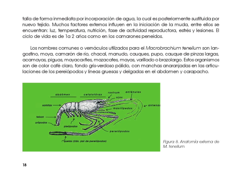 Moderno Anatomía Gris 8 Composición - Imágenes de Anatomía Humana ...