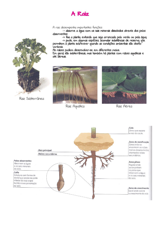 Livro de Ciências da Natureza - Plantas by Annie Mat - Issuu