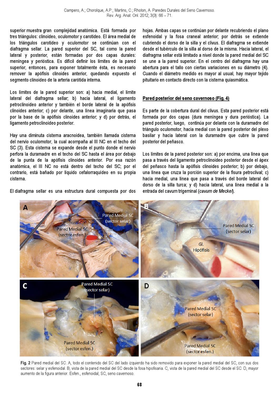 Revista Argentina de Anatomía Online 2012; 3(3):61-96. by Nicolas ...