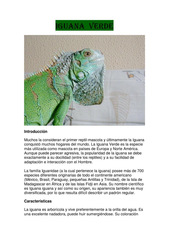 iguanas verdes by isaac vazquez dominguez  issuu