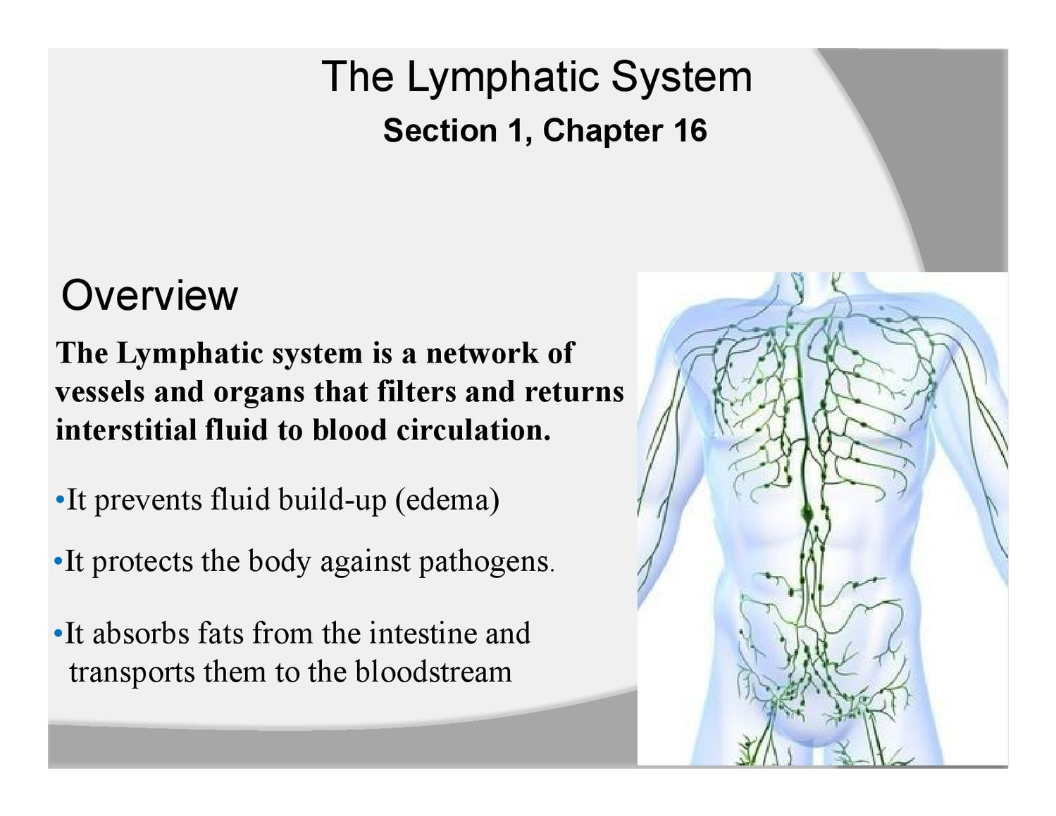 Section 1 Chapter 16 Lymphatic System By Michael Walls Issuu
