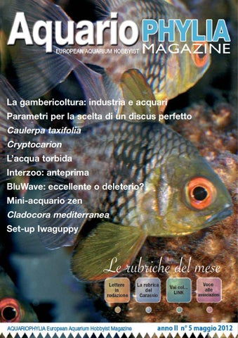 Aquariophylia 2 2012 febbraio by valerio zupo issuu aquariophylia 5 maggio 2012 fandeluxe Gallery