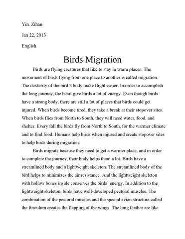 birds migration essay by bill yin issuu page 1