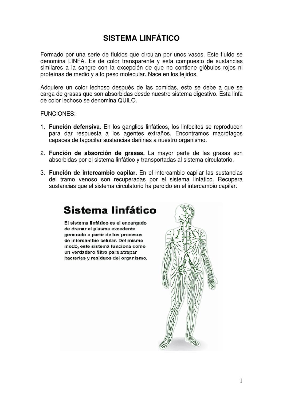 SISTEMA LINFATICO by Pamela Garcia - issuu