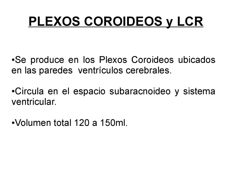 Histologia de los Plexos Coroideos by Carolina Espinoza - issuu
