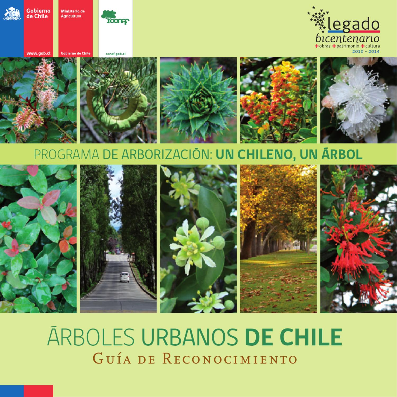 Rboles urbanos de chile gu a de reconocimiento by for Porque hay arboles de hoja perenne