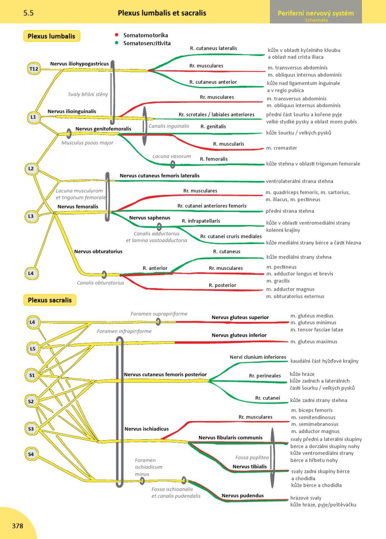 Memorix anatomie by radovan hudak issuu for Innendekoration ruschlikon