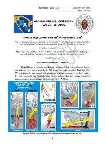 Guía del Quiridio Vertebrados by CARMEN BONET - issuu