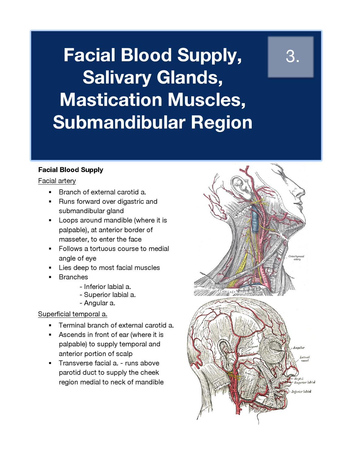 3. Facial Blood Supply, Parotid, Mastication Muscles ...