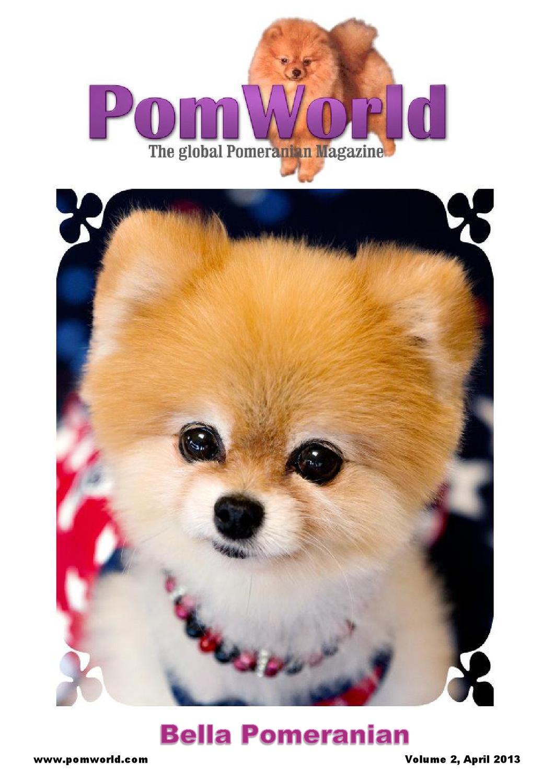 Pomworld The Global Pomeranian Emagazine April 2013 By Denise