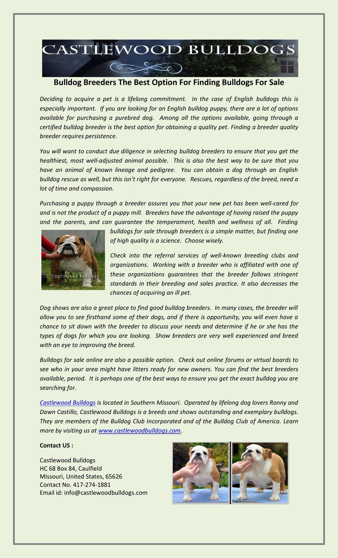 Bulldog Breeders The Best Option For Finding Bulldogs For