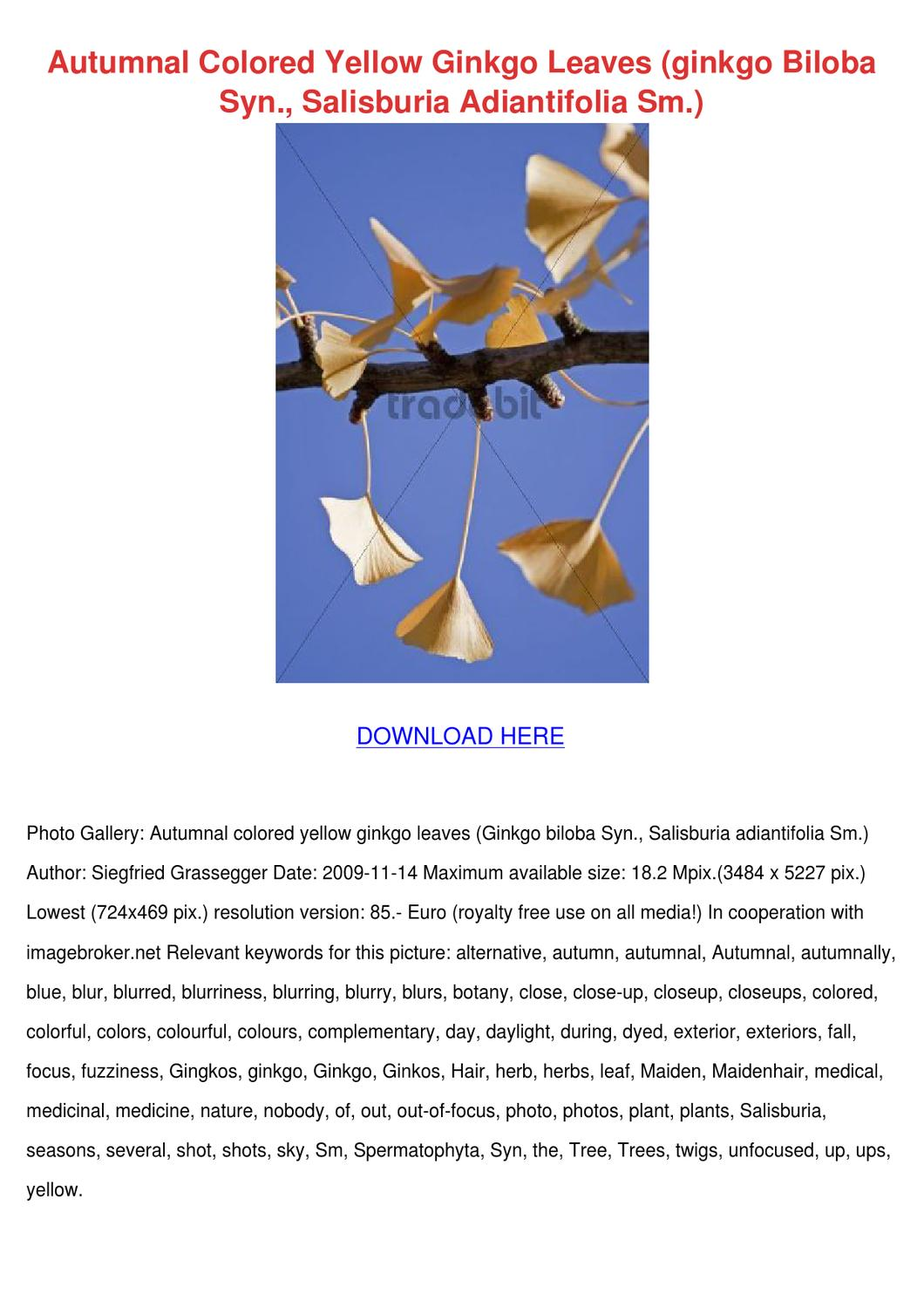 Autumnal Colored Yellow Ginkgo Leaves By Lula Hattaway Issuu Lg Lcd Monitor Flatron L1718s Service Manual