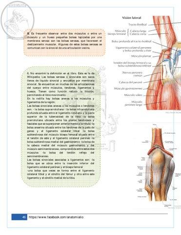 Trabajo Rodilla Parte 3 by Anatomía Lio - issuu