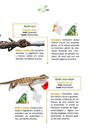 Guía de anfibios y reptiles quebrada pericos by Naturaleza Creativa ...