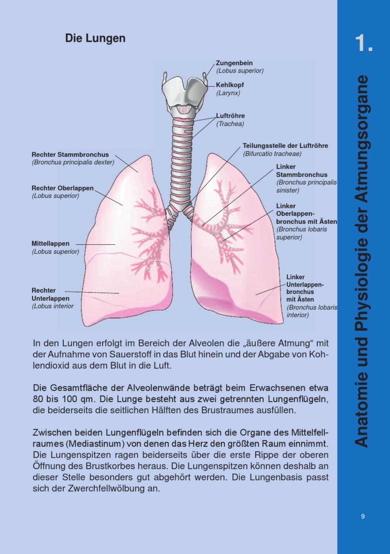 Erfreut Menschliche Anatomie Lunge Bilder - Menschliche Anatomie ...