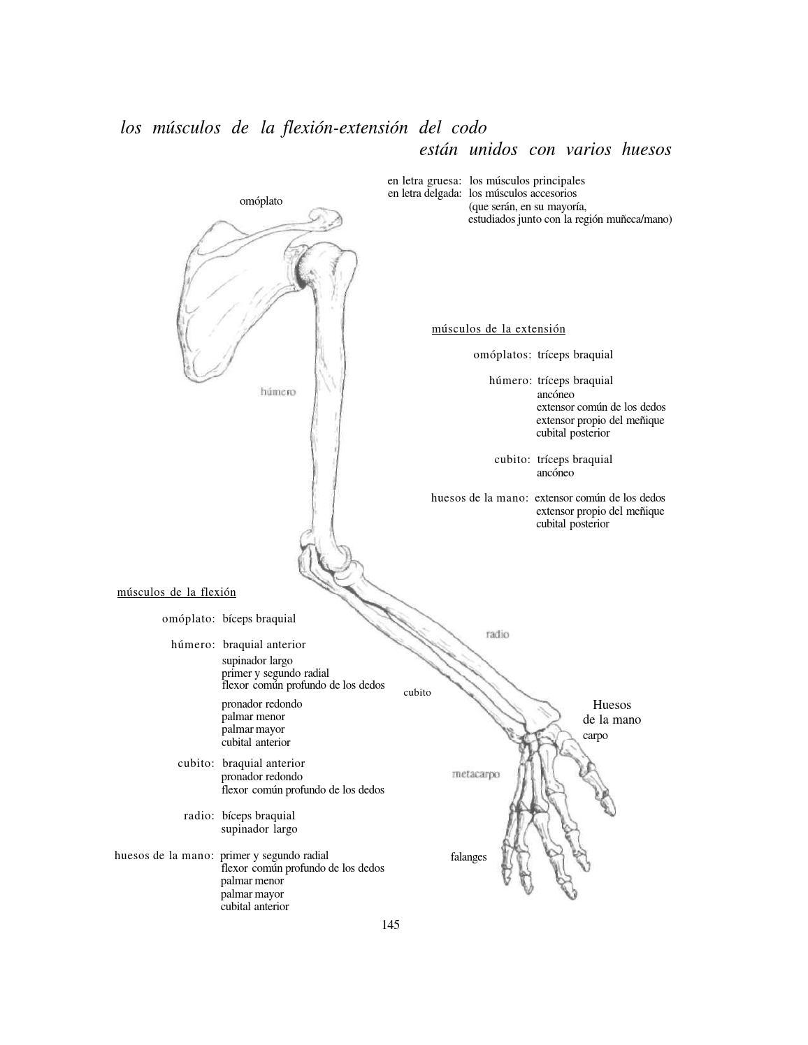 Lujo Anatomía Dedo Humano Foto - Imágenes de Anatomía Humana ...