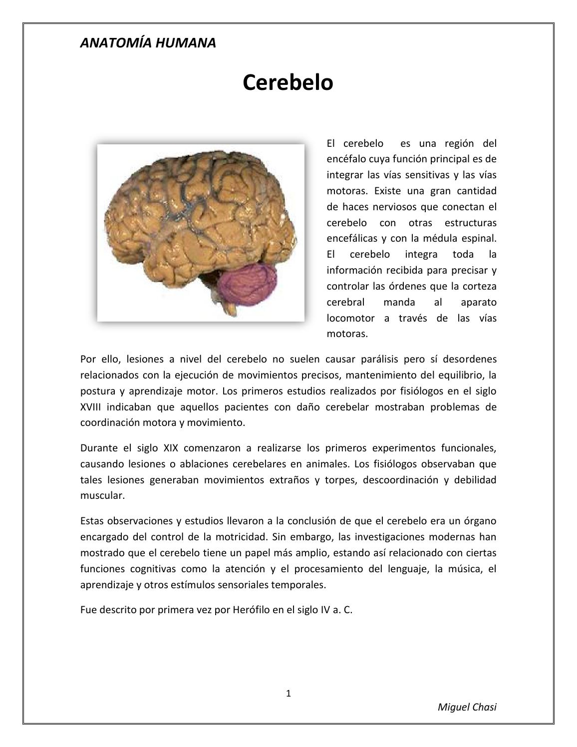 Moderno Anatomía Parálisis Cerebral Embellecimiento - Anatomía de ...