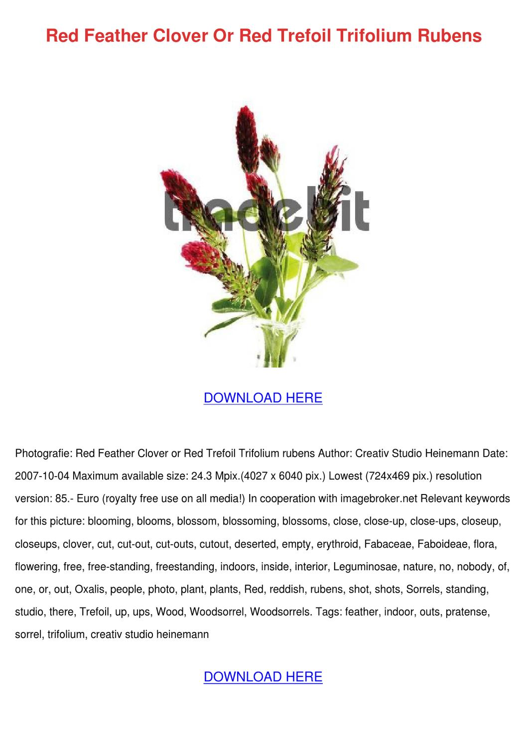 the red feathers march pdf