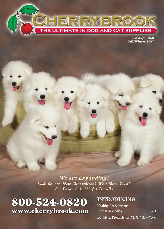 American Mastiff Dog Breed Pattern #2 Men-Women Adult Ankle Socks