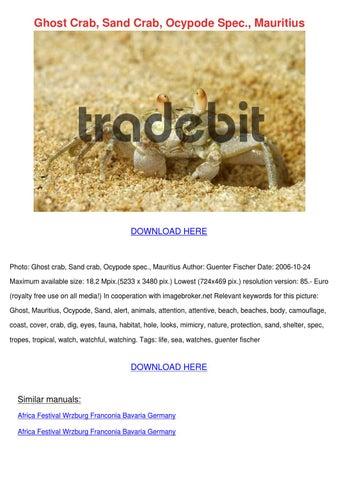 Ghost Crab Sand Crab Ocypode Spec Mauritius by