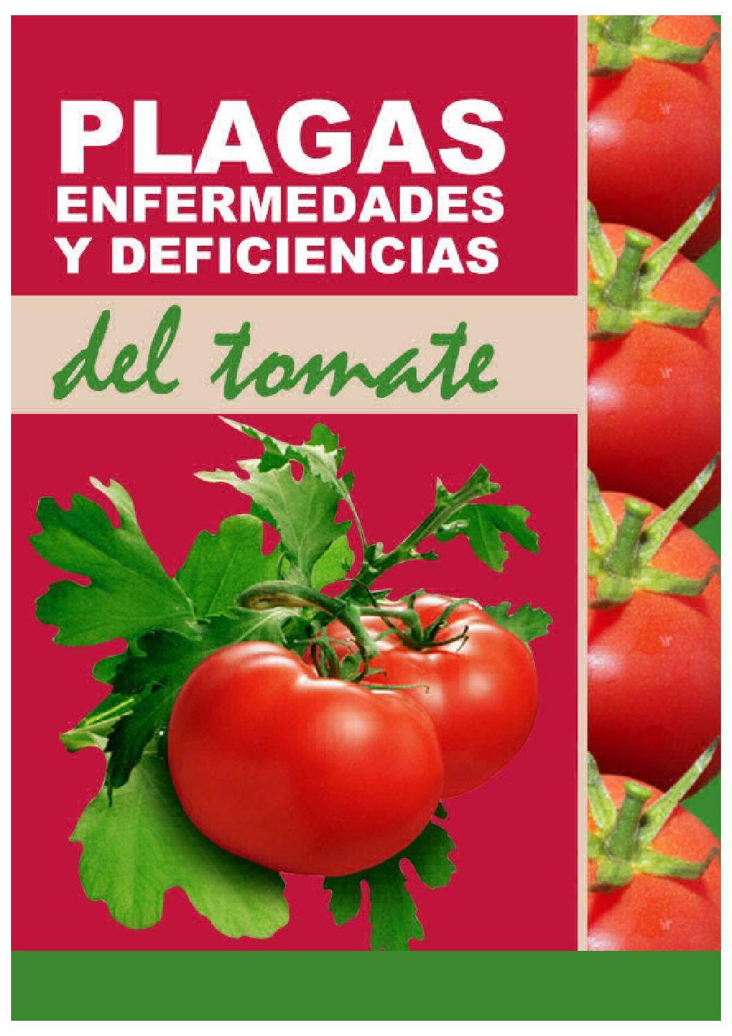 plagas enfermedades y deficiencias del tomate by