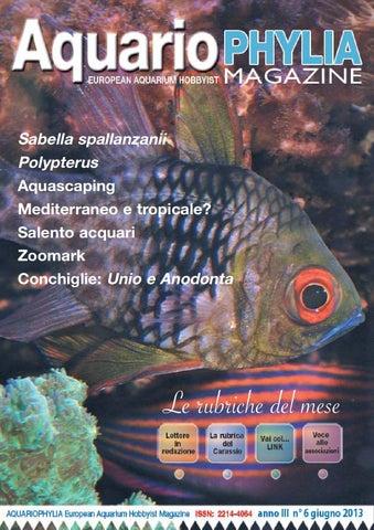 Aquariophylia 2 2012 febbraio by valerio zupo issuu aquariophylia 6 13 fandeluxe Gallery