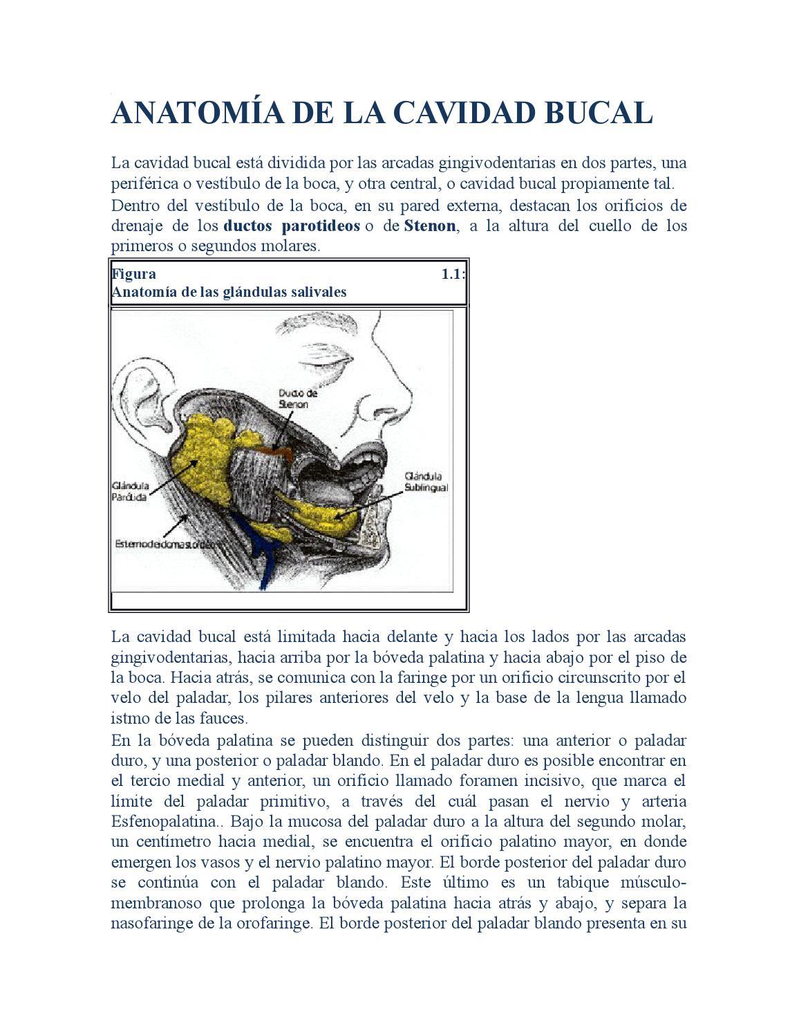 Anatomía de la cavidad bucal by Elizabeth Picoita - issuu