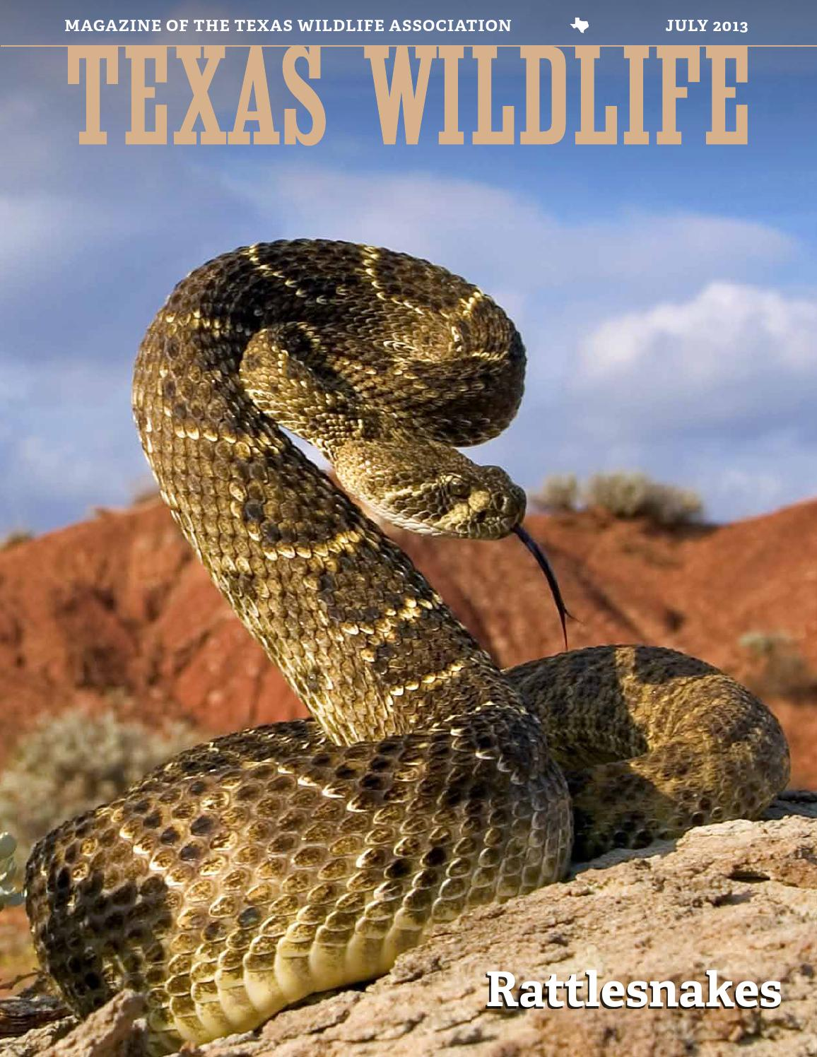 The One and Only Western Diamondback Rattlesnake Road Warrior