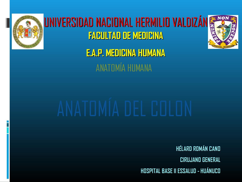 4 anatomía del colon by HELARD ROMAN CANO - issuu