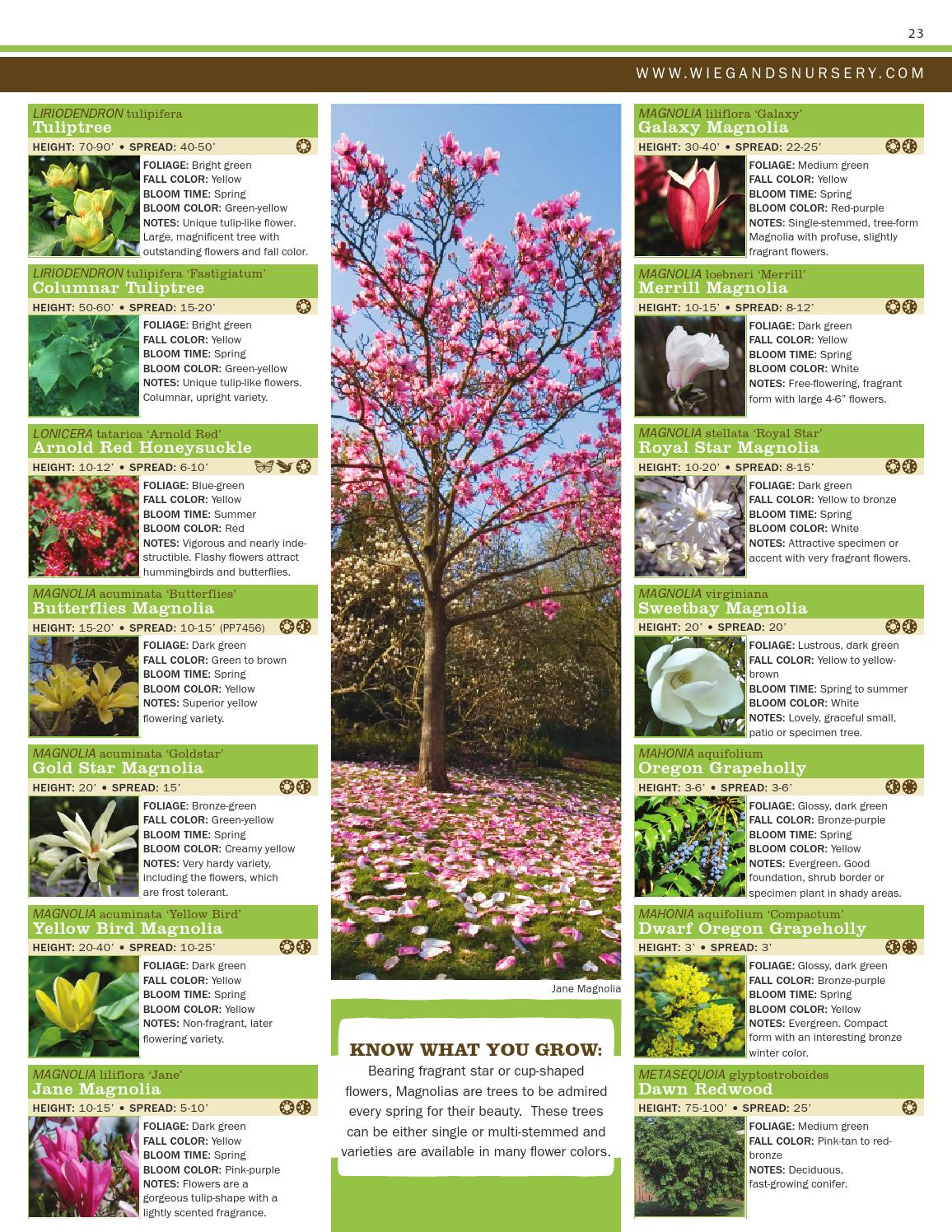 Plant Catalog By Ray Wiegands Nursery Issuu