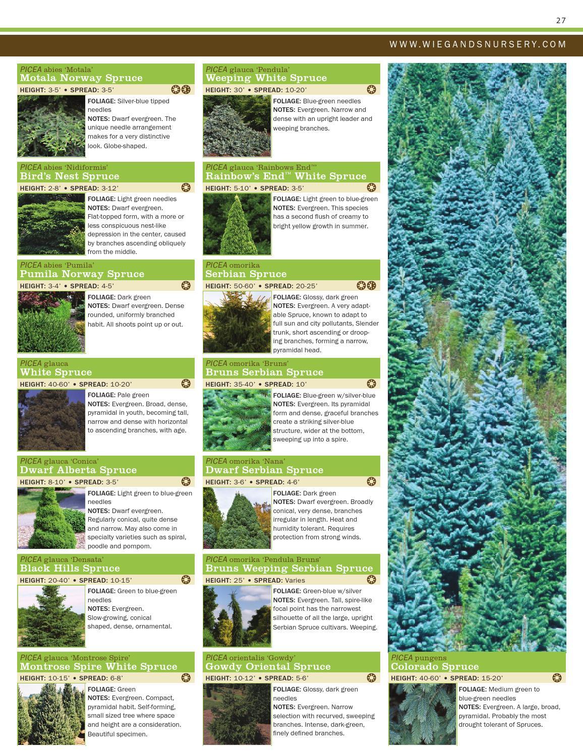 Plant Catalog By Ray Wiegands Nursery Issuu