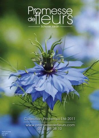 échinacée Pourpre Blanc /& Violet Fleur Graines MIX//Durable vivace 40
