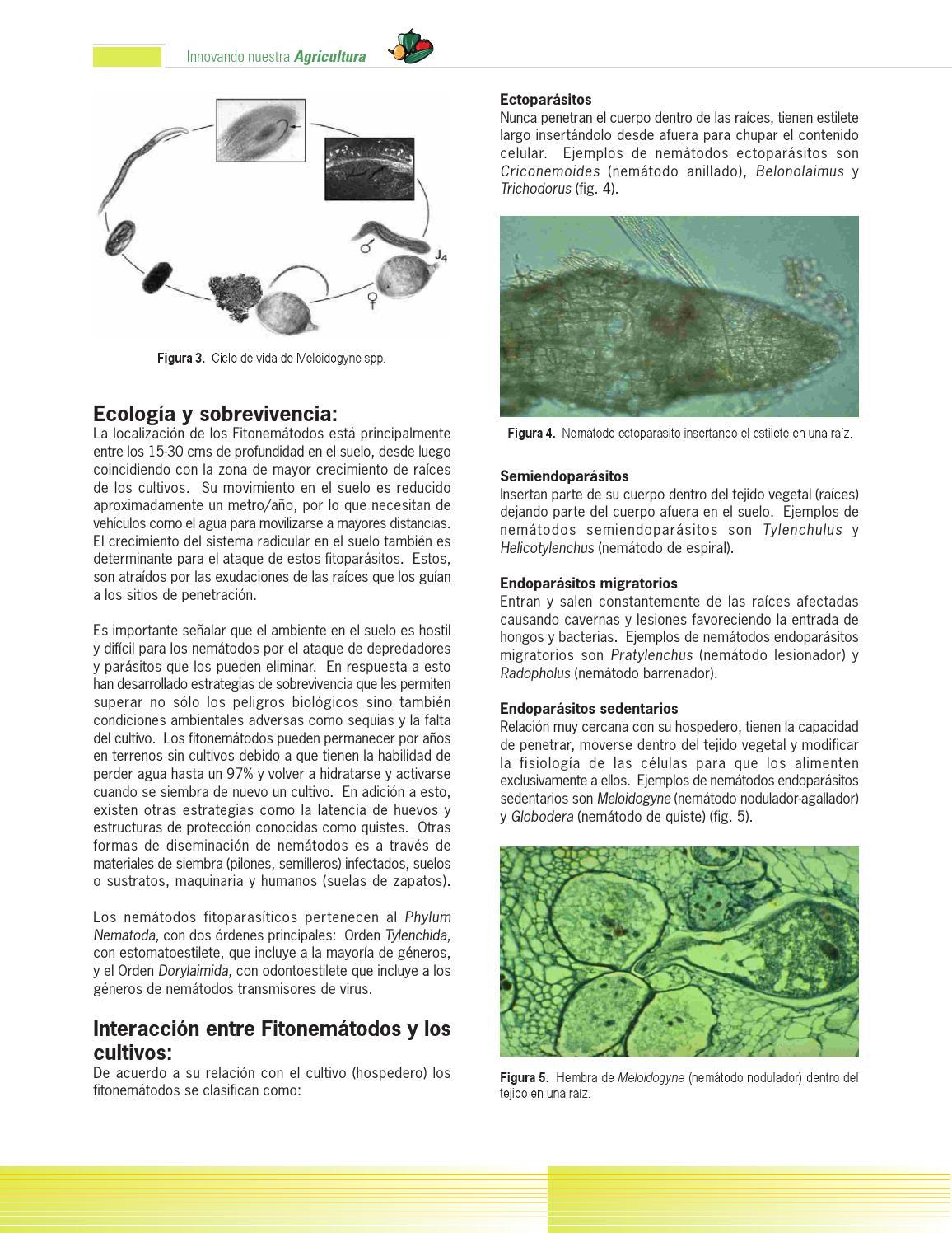 Contemporáneo Anatomía De Los Nematodos Colección de Imágenes ...