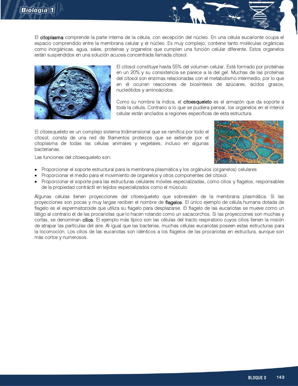 Bio1 Fb3s By Rosario Pacheco Rdz Issuu