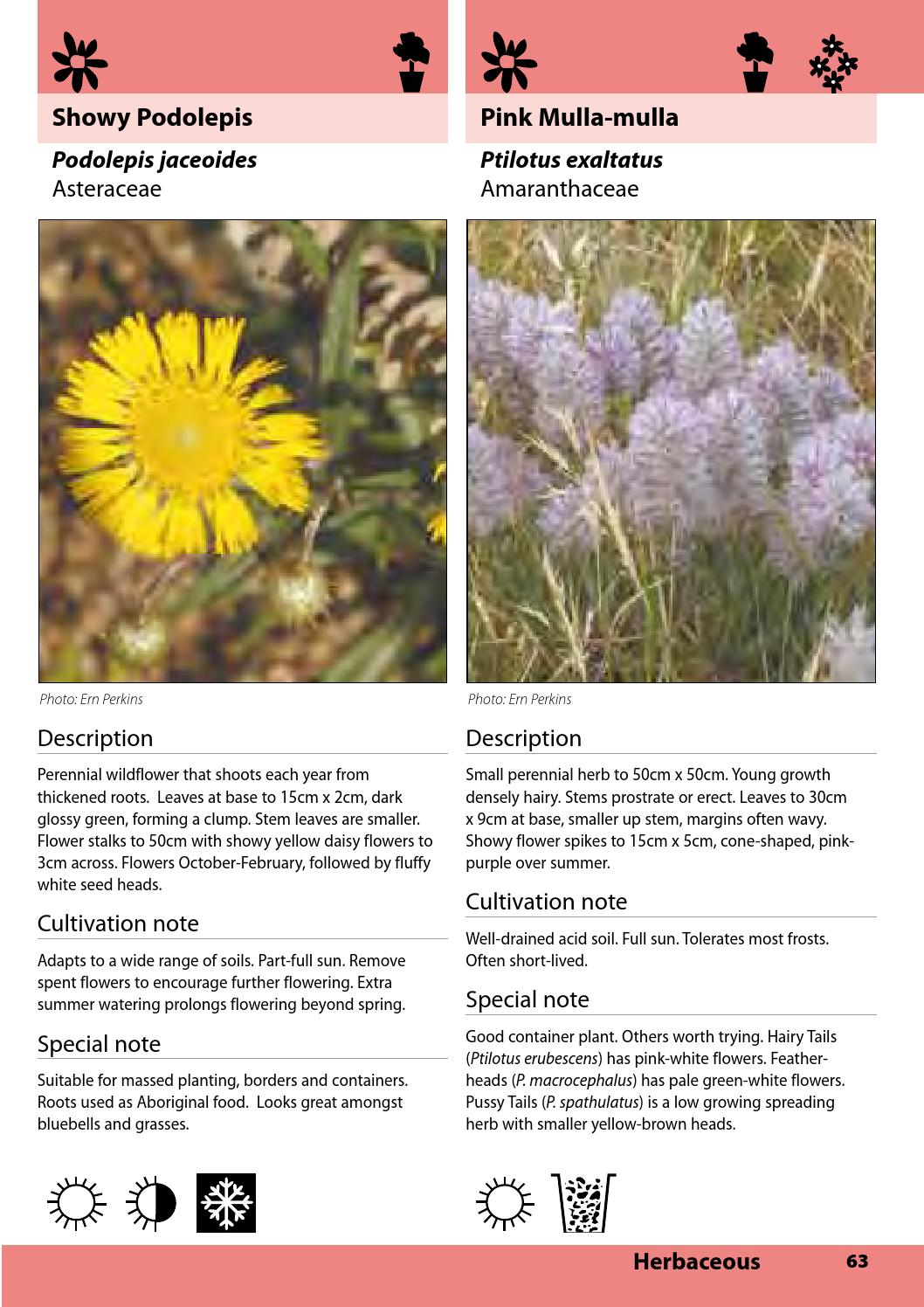 Indigenous Plants Of Bendigo 3rd Edition By City Of Greater Bendigo
