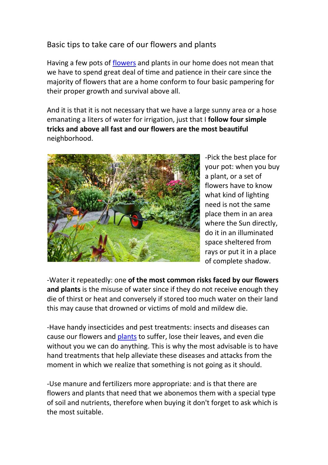 Basic Tips To Take Care Of Our Flowers And Plants By Floraqueen Issuu