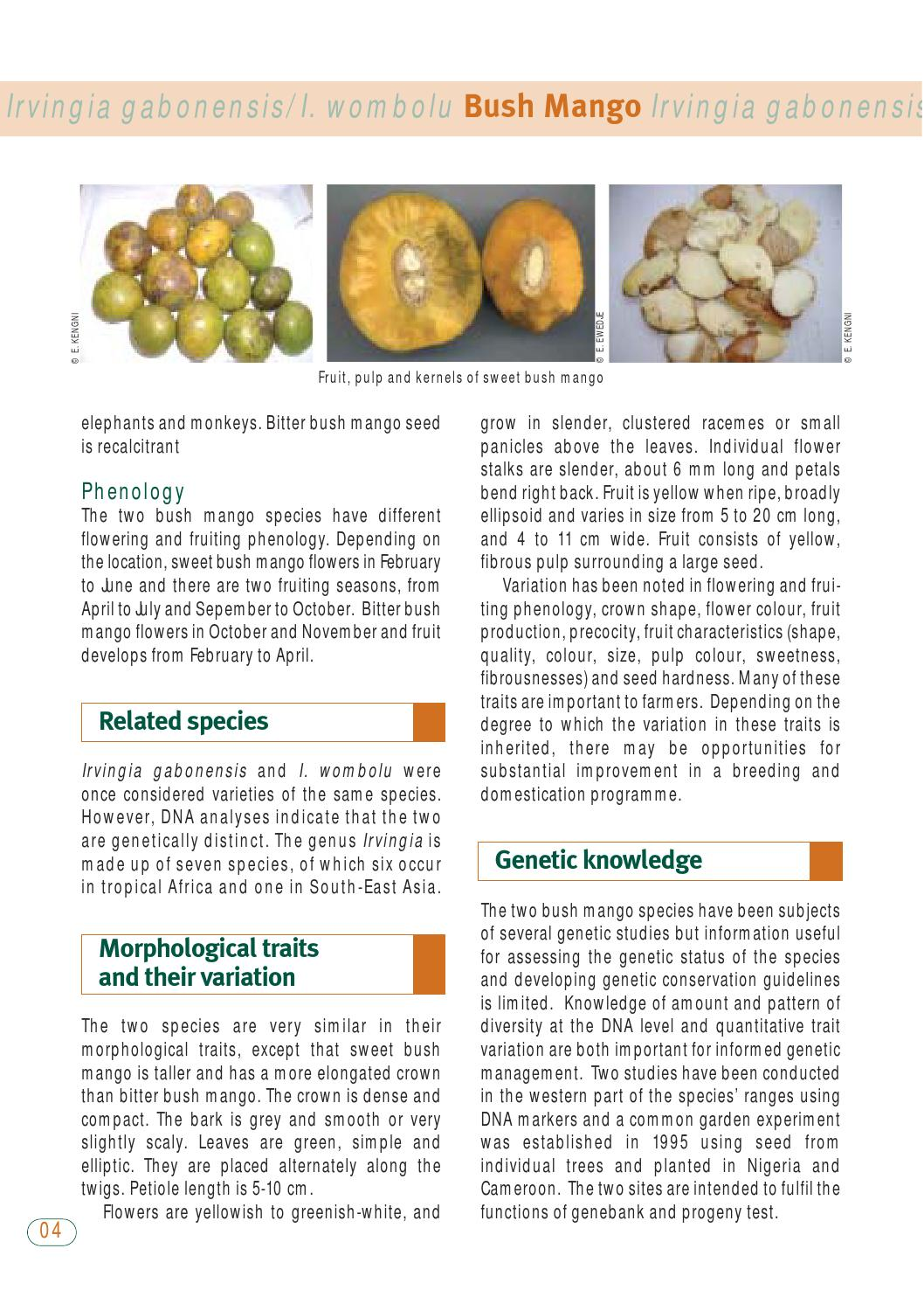 Irvingia En By Bioversity International Issuu