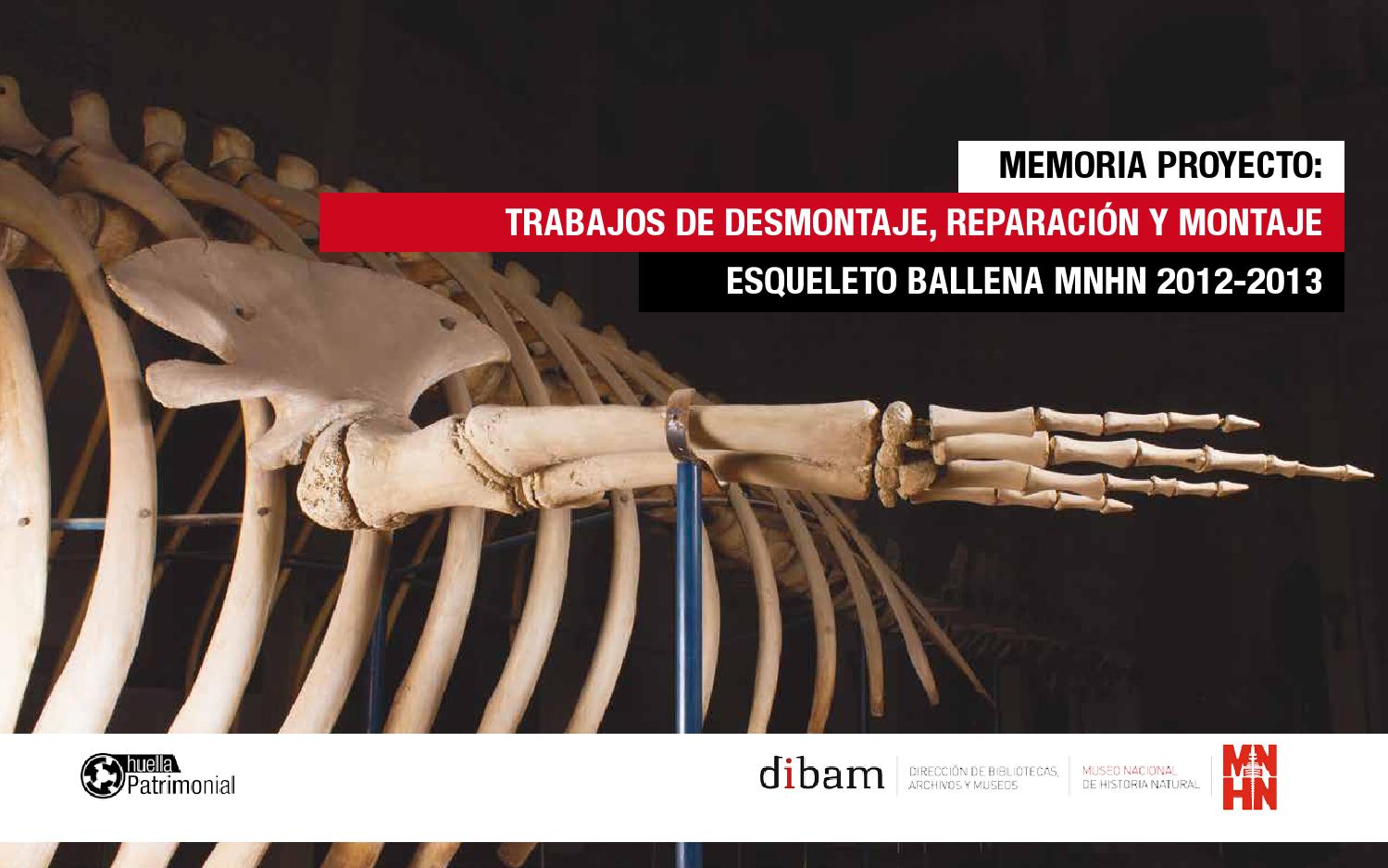 Memoria Proyecto Ballena by Museo Nacional de Historia Natural - issuu