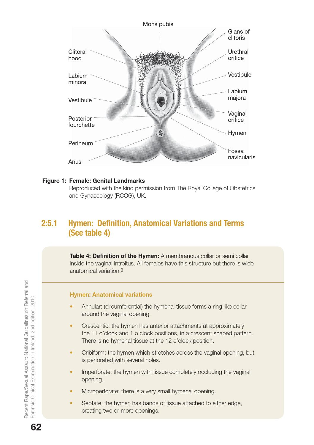 Sexual Assault National Guidelines By Hse Communications -8152