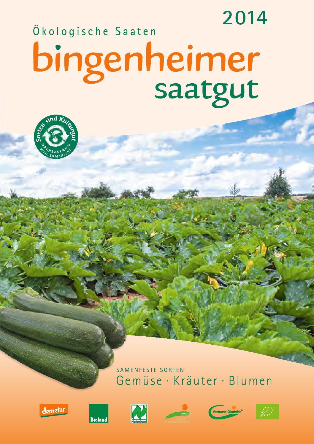 samenfest von unserer Farm mexikanische Ungarische Minigurke
