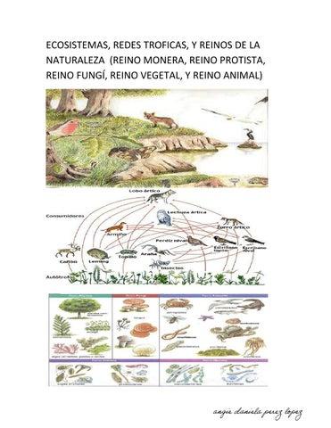 Ecosistemas Redes Troficas Y Reinos De La Naturaleza Signed