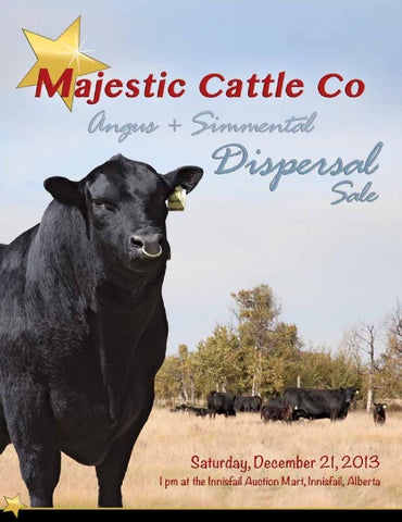 4e666949b0f Majestic Cattle Co Angus   Simmental Dispersal 2013 by Everything ...