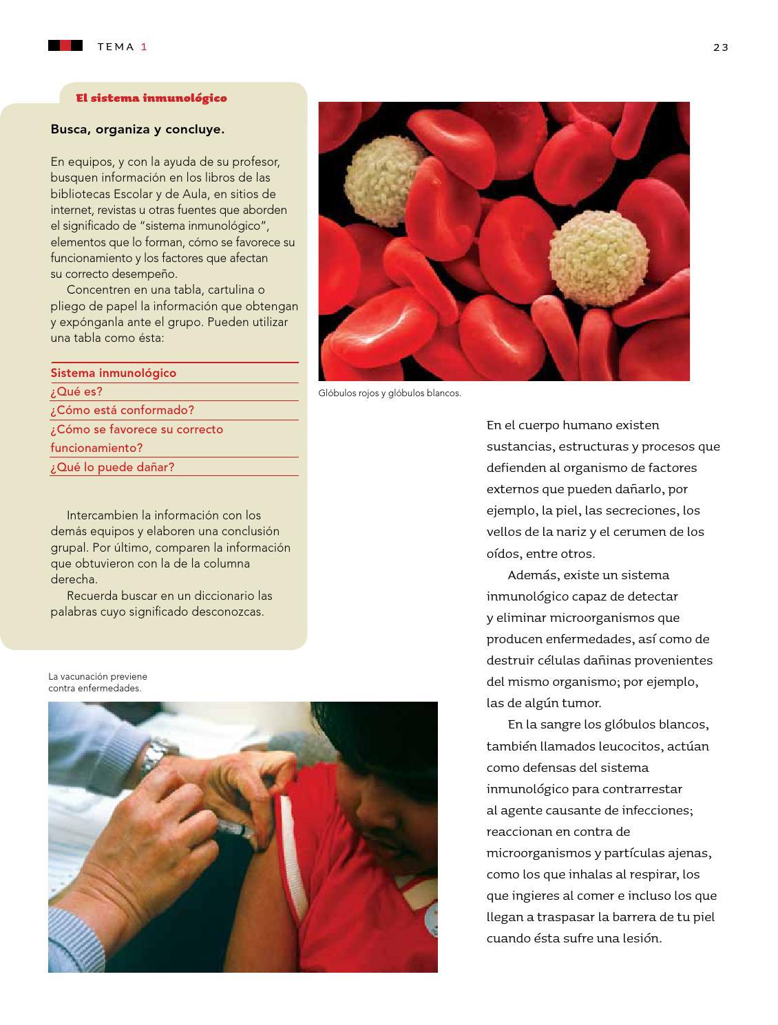 cómo se fortalece su correcto funcionamiento del sistema inmunológico