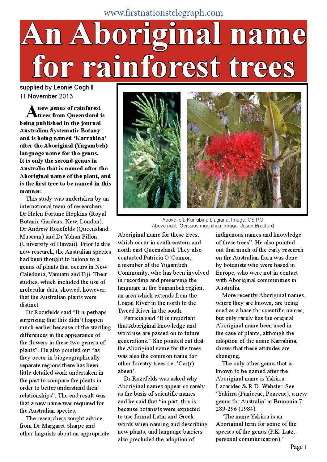 An aboriginal name for rainforest trees by Stephen Hagan - issuu