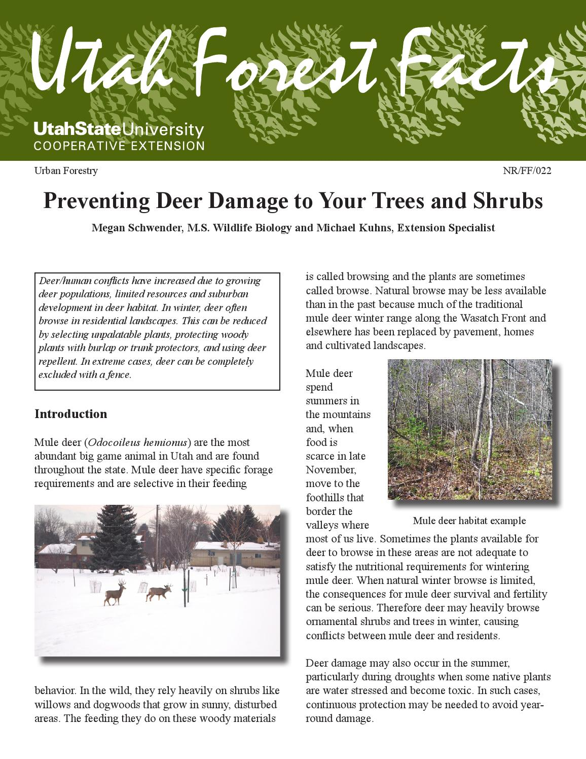 ornamental bamboo fence.htm preventing deer tree damage by utah state university extension issuu  preventing deer tree damage by utah